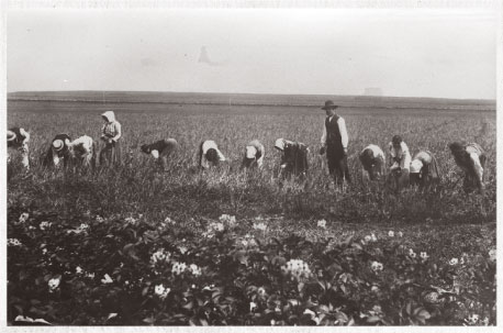 Bulgarian migrant farmworkers during harvest