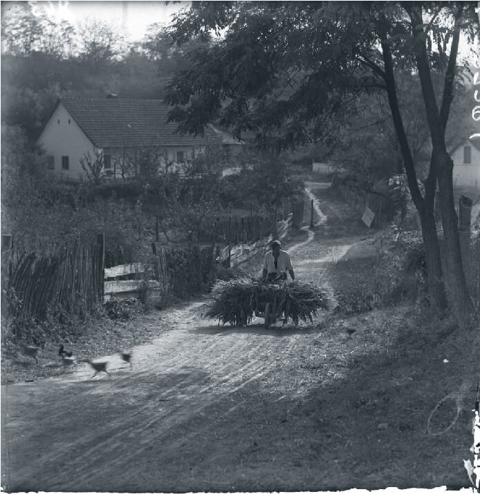 Hungarian peasant on dirt road pushing reeds in a wheelbarrow