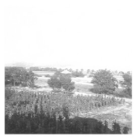 A view of the Fábos vineyard in rural Hungary in 1940