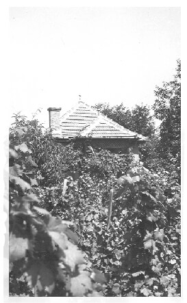 A view of Fábos vineyard farm shack in 1940