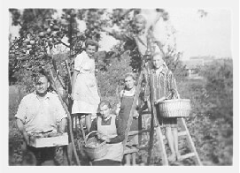 Pista picking apples with hired farmworkers in 1940