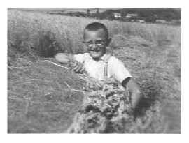 Gyula helping with the hay harvest in 1941