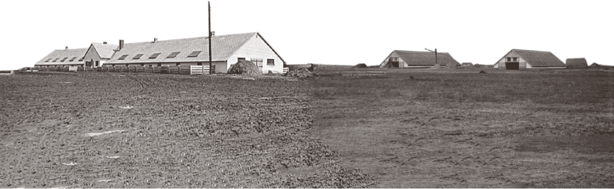 New collective or state farm buildings in Hungary around 1950