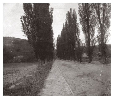 Poplar trees lining road in rural 1900s Hungary