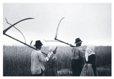 Field workers with scythes in Hungary 1935